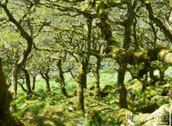 Buying your own piece of woodland
