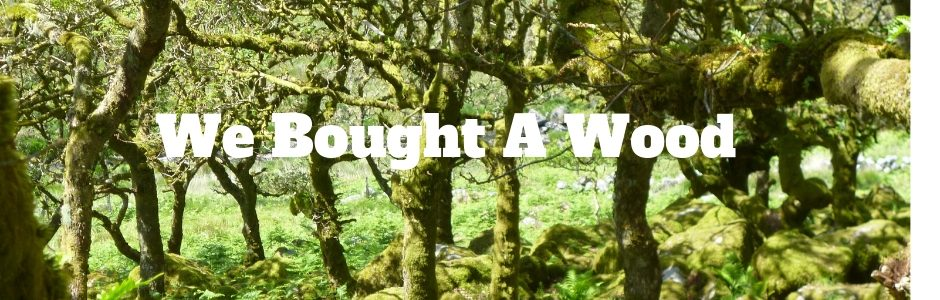 We Bought a Wood blog post following one family when they purchased a wood in Devon and built a cabin (1)