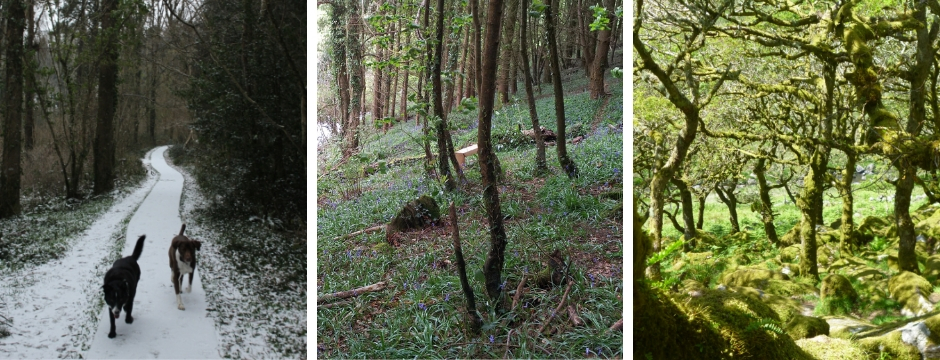 The Woodland through the seasons