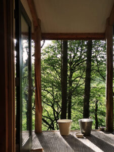 A wooden cabin porch looking out to woodlands
